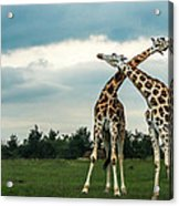 Who Is Taller Acrylic Print