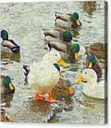 Who S On First Base Acrylic Print by Rosemarie E Seppala