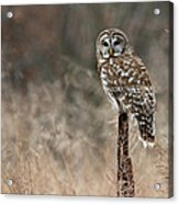 Whooo Goes There Acrylic Print