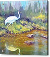 Whooping Crane - Searching For Frogs Acrylic Print