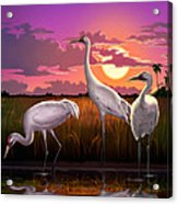 Whooping Cranes Tropical Florida Everglades Sunset Birds Landscape Scene Purple Pink Print Acrylic Print
