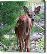 Who's There? Acrylic Print