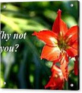 Why Not You Acrylic Print
