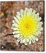 Wickiup Wild Flower Acrylic Print
