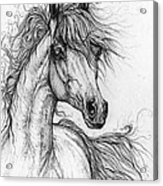 Wieza Wiatrow Polish Arabian Mare  Drawing 1  Acrylic Print