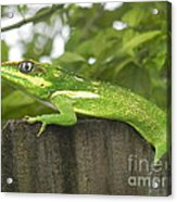 Wild About You Acrylic Print
