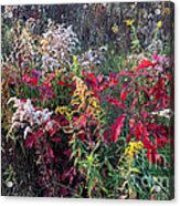Wild As Can Be Acrylic Print