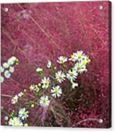 Wild Asters And Muhly Grass Acrylic Print