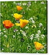Poppies 3 - Wild At Heart Acrylic Print