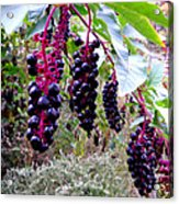 Wild Berry Acrylic Print by  George Griffiths