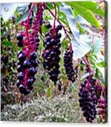 Wild Berry Acrylic Print