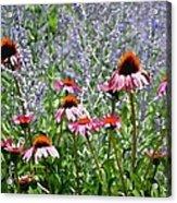 Wild Bliss Acrylic Print