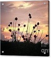 Wild Bouquet Acrylic Print