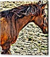 Wild Bronc Acrylic Print