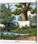 Wild Cattle Of Britain Acrylic Print