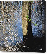 Wild Cherry Tree On The Sacramento River  Acrylic Print