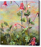 Wild Columbines Acrylic Print by Lenore Gaudet