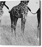 Wild Connection Acrylic Print