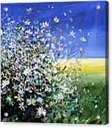 Wild Daisies Acrylic Print