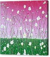 Wild Daisy Field Acrylic Print