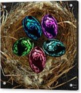 Wild Eggs In My Nest Acrylic Print