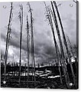 Wild Fire Aftermath In Black And White Acrylic Print
