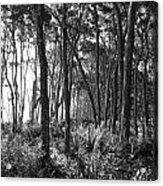 Wild Florida Acrylic Print by Thomas Leon