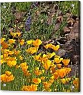 Wild Flower And Rocks Acrylic Print