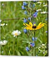 Wild Flower Delight Acrylic Print
