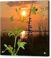 Wild Flower Ia Mlo Acrylic Print