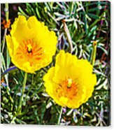 Wild Flowers 2 Acrylic Print