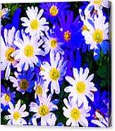 Wild Flowers 3 Acrylic Print