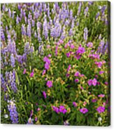 Wild Flowers Display Acrylic Print