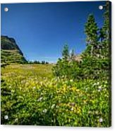 Wild Flowers Glacier National Paintedpark   Acrylic Print by Rich Franco