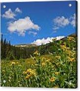Wild Flowers In Rocky Mountain National Park Acrylic Print