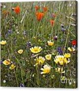 Wild Flowers Russian Ridge Acrylic Print