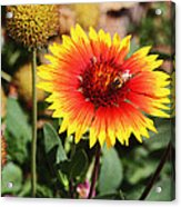 Wild Flowers Sierra Ancha Mountains Acrylic Print