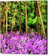 Wild Forest Violets Acrylic Print