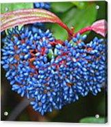Wild Fruits2 Acrylic Print