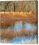 Wild Geese On The Farm Acrylic Print