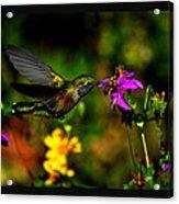 Wild Geranium Cafe II Acrylic Print