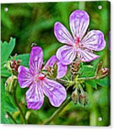 Wild Geranium On Trail To Swan Lake In Grand Teton National Park-wyoming Acrylic Print