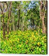 Wild Ginger And Ohia Trees Acrylic Print