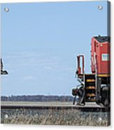 Train Chasing Canada Goose Acrylic Print
