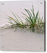 Wild Grass With Deep Roots 8x10 Acrylic Print by Michael Flood