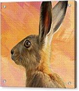 Wild Hare Acrylic Print by Tanya Hall