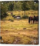 Wild Horse Band In Kananaskis Country Acrylic Print