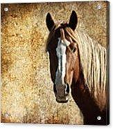 Wild Horse Fade Acrylic Print