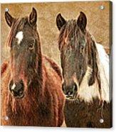 Wild Horse Pair Acrylic Print