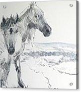 Wild Horses Drawing Acrylic Print